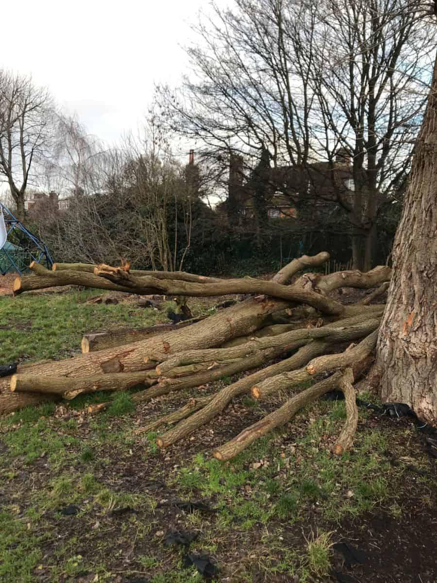 XUL Tree trunks- King Alfred School